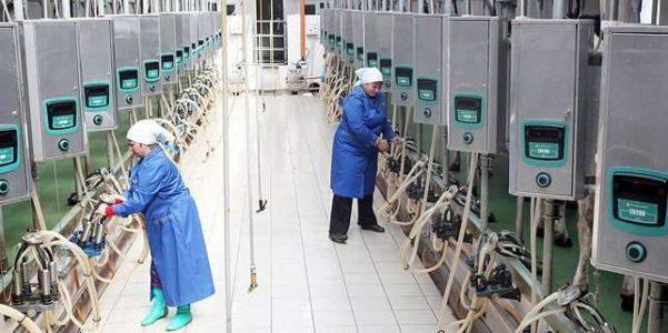 В Беларуси планируется создать отечественный роботизированный доильный комплекс