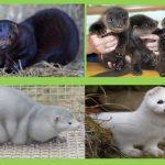 Витамины и минеральные вещества в кормлении пушных зверей