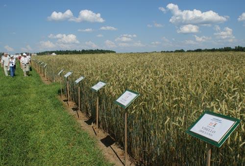 Научная основа урожая
